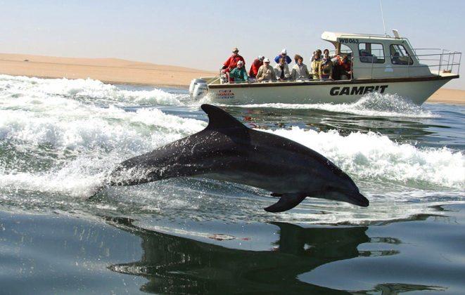 Delfin- & Walbeobachtung Walvis Bay