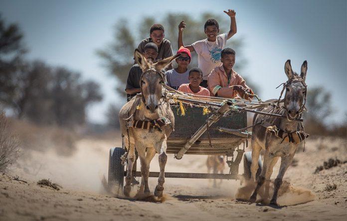 Ein Lebensstil im ländlichen Namibia: die Eselskarre