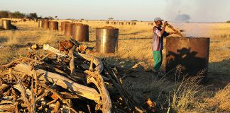 In Namibia wird durch Holzkohleproduktion die Verbuschung bekämpft