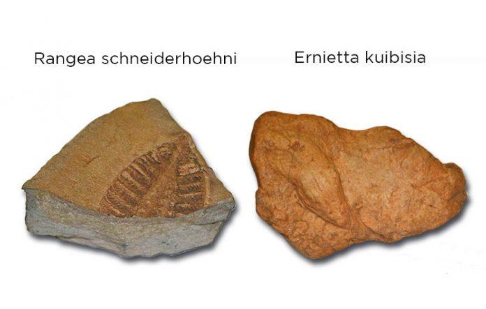 Ursprung der Tierwelt liegt in Namibias Süden