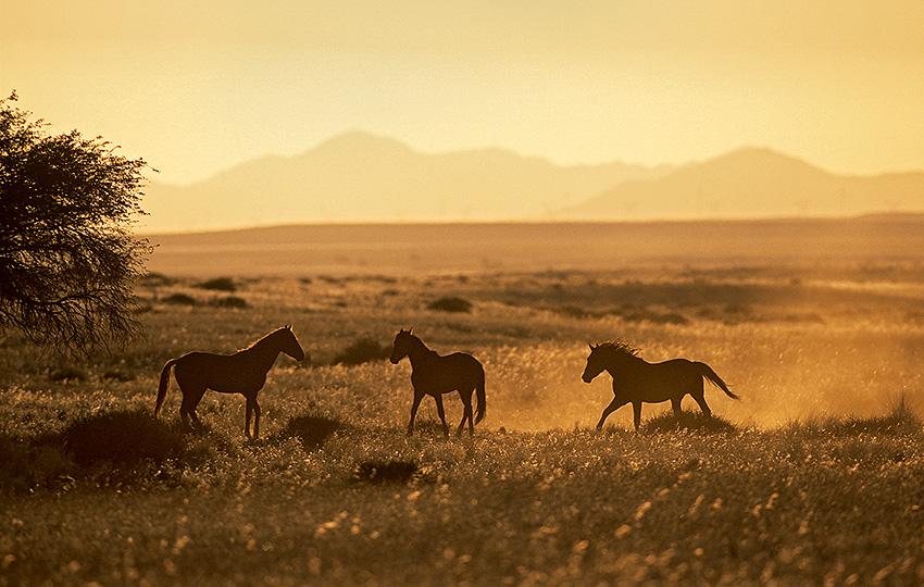 Namibia Focus