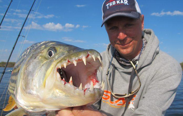 Tigerfisch Angeln