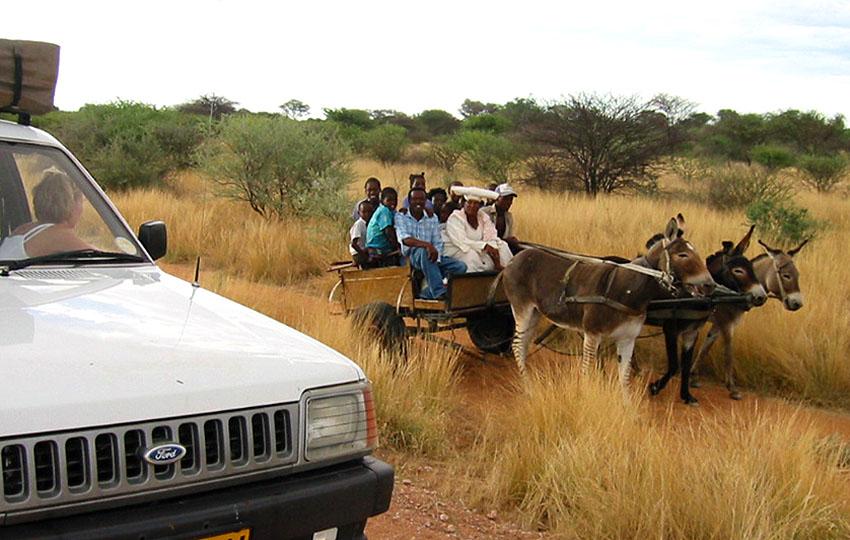 """Auf dem Weg zur Farm Neukluvensiek (bei Otjiwarongo) Begegnung mit einer Eselskarre mit eingespanntem """"Zesel""""."""