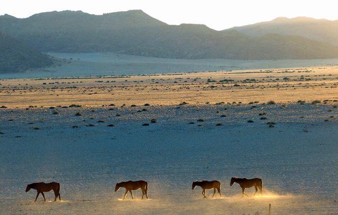 Wilde Pferde Aus
