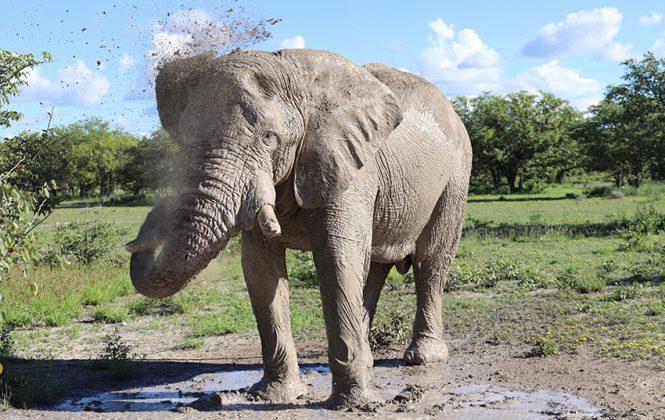 Namibia badender Elefant