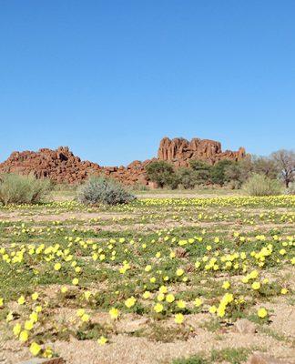 Namibia gelbgrüner Teppich