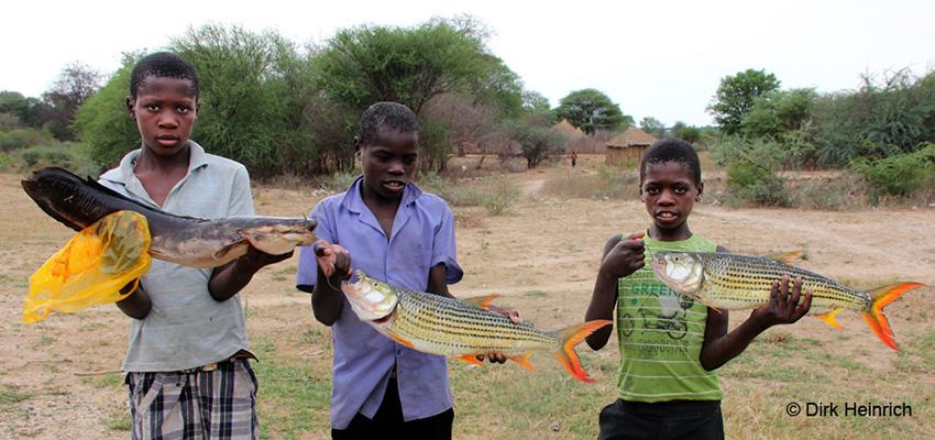Angeln Tigerfisch Wels