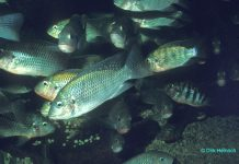 Hardap Fische