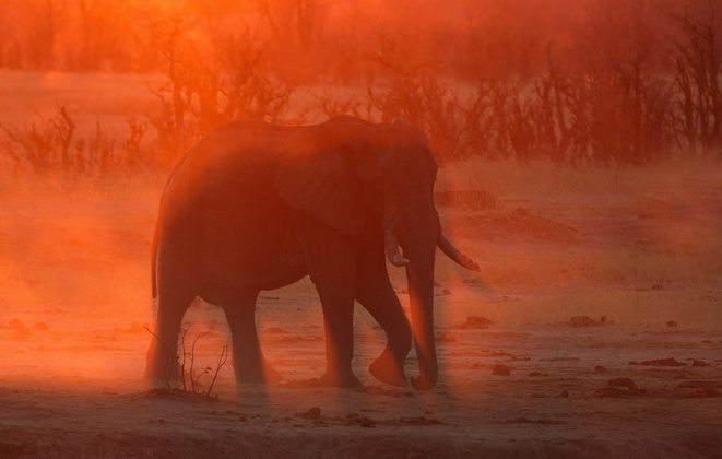 Elefant Sonnenuntergang Namibia