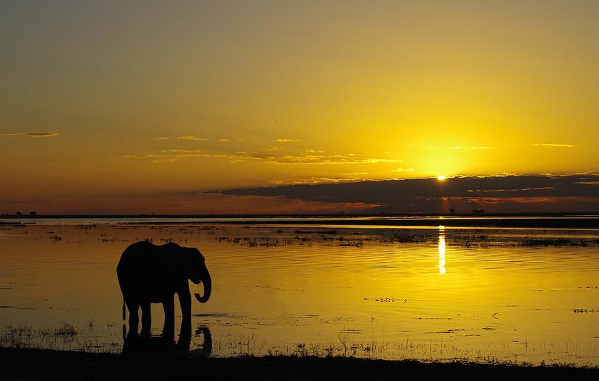Chobe Namibia