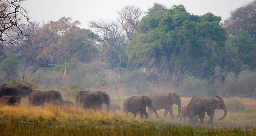 Elefanten, Namibia
