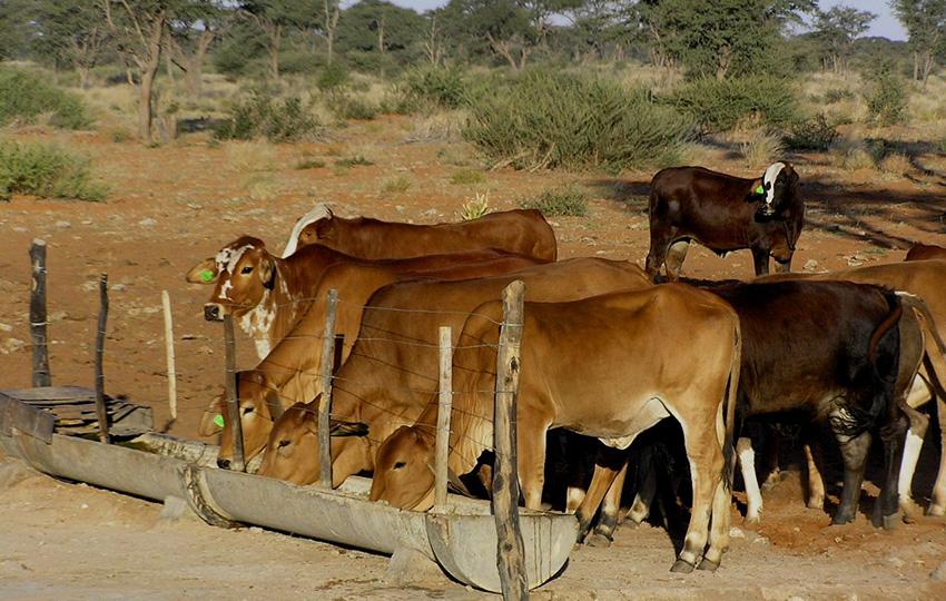 Farm bei Dordabis, Namibia