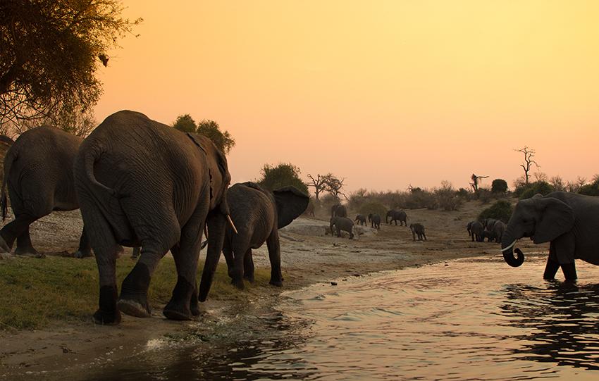Namibia Sambesi-Region Elefanten
