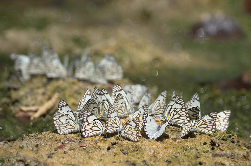Schmetterlinge, Namibia