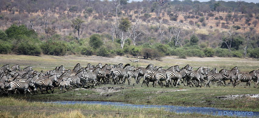 Burchell-Zebras, Namibia