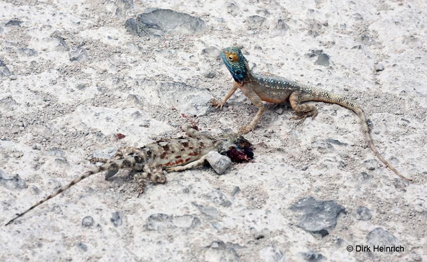 Agame Namibia