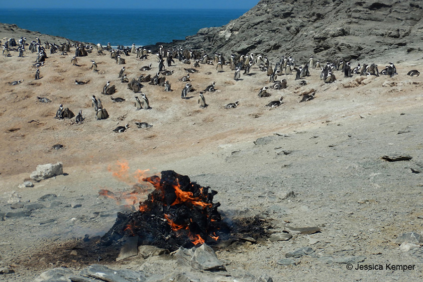 Verbrennen toter Pinguine