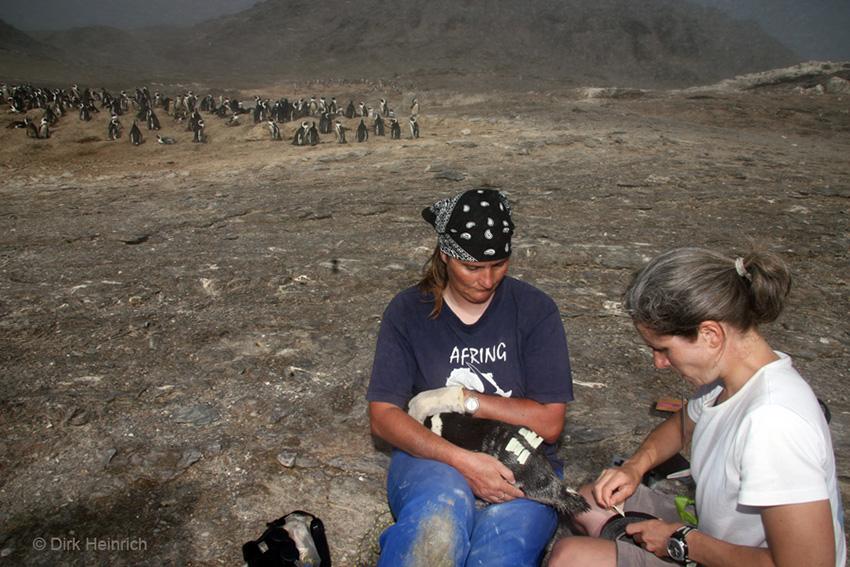 Forscherinnen mit Pinguin