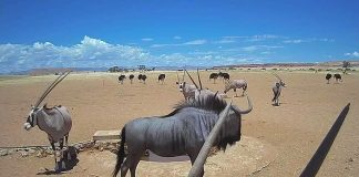 Live-Webcam Namibia