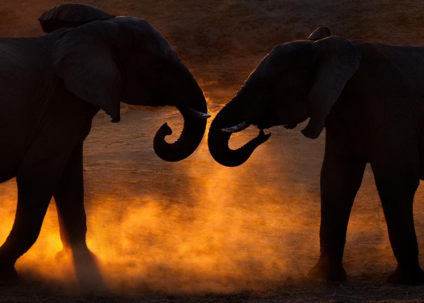 Elefantenfotografie - Sonnenuntergang