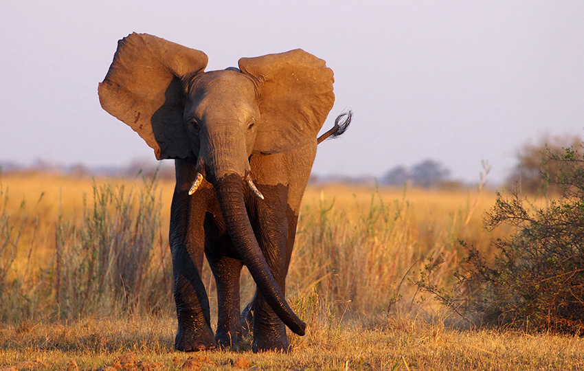 Elefantenfotografie