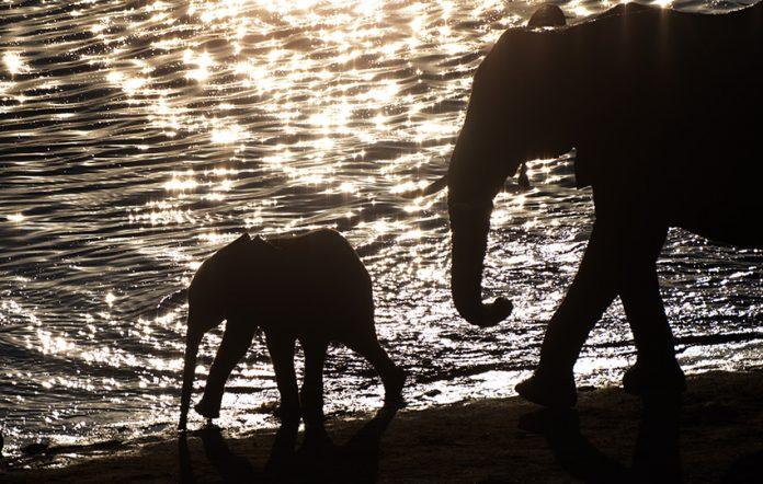 Elefantenfotografie - Wasser