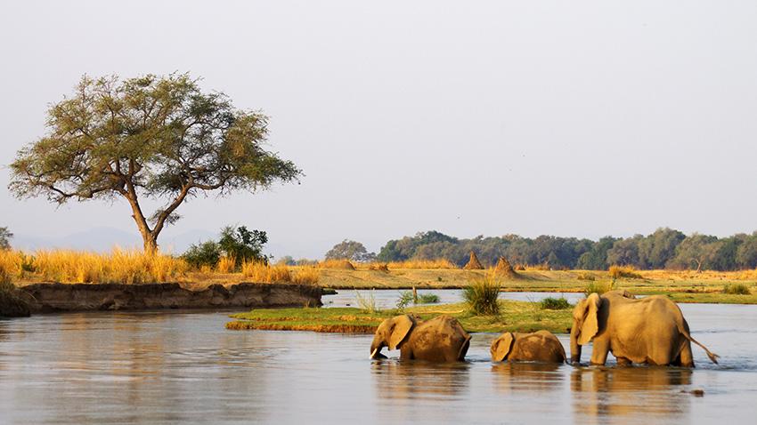 Elefantenfotografie - Familie