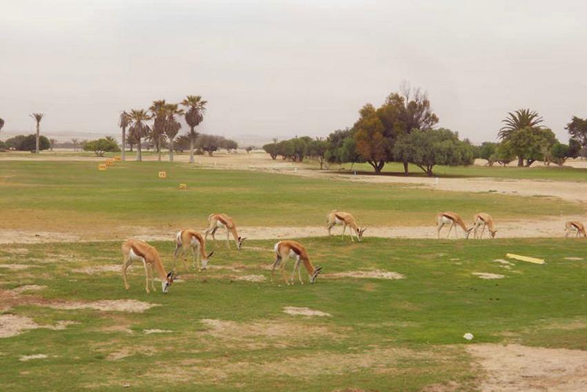 Rössmund Golf Club mit Springböcken