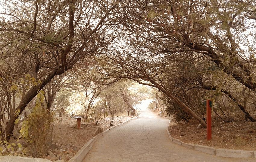 Botanischer Garten Namibia