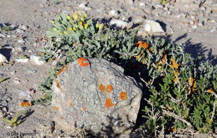 Flechten, Lüderitz