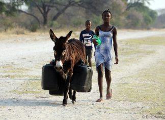 Esel mit Wasserkanistern