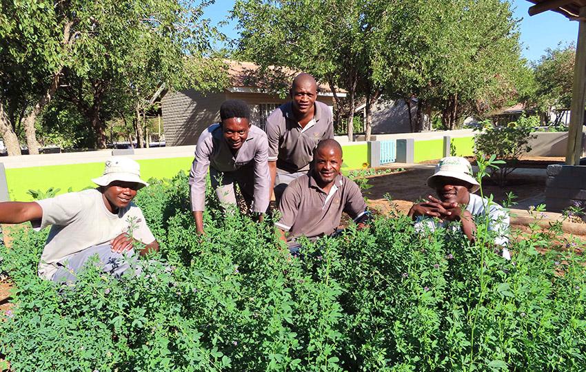 Damara Mopane Lodge Gärtner