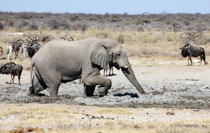 Dürre im Etosha Nationalpark