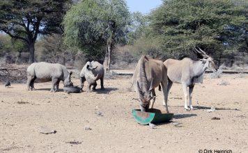 Wildfarm, Namibia