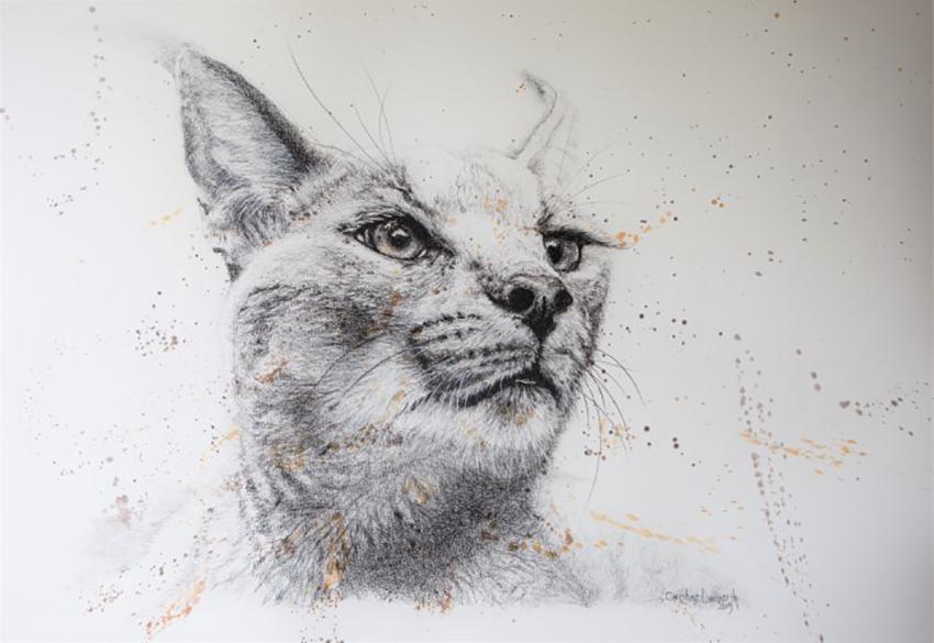 Karakal, Kohlezeichnung von Christine Lamberth