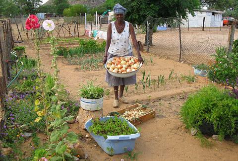 Grundeinkommen, Gemüsegarten