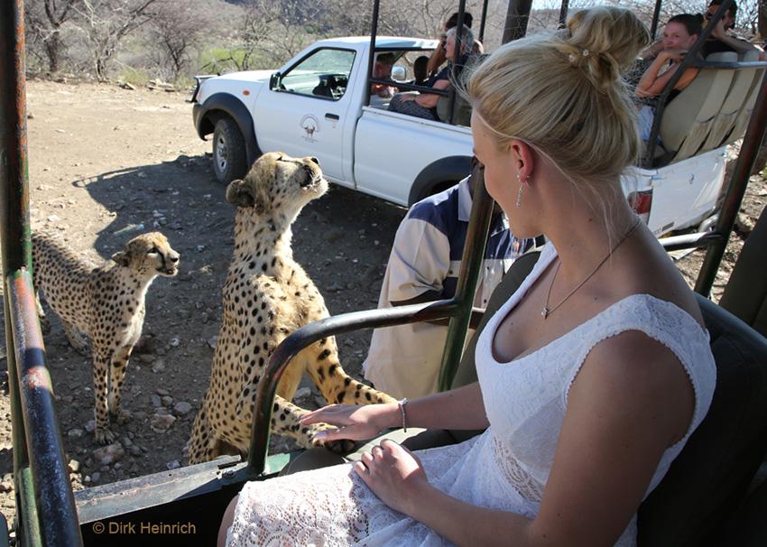 Vroni mit Geparden