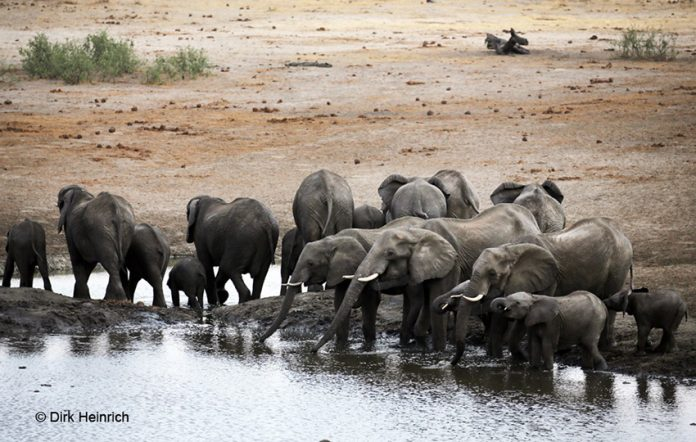 Khaudum, Elefanten