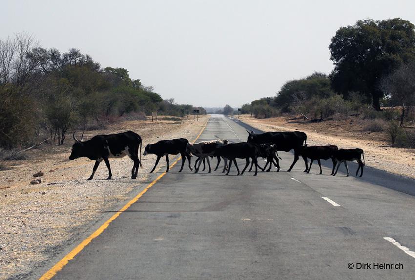 Namibia Kommunalgebiete