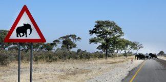 Vorsicht Tiere auf Namibias Straßen