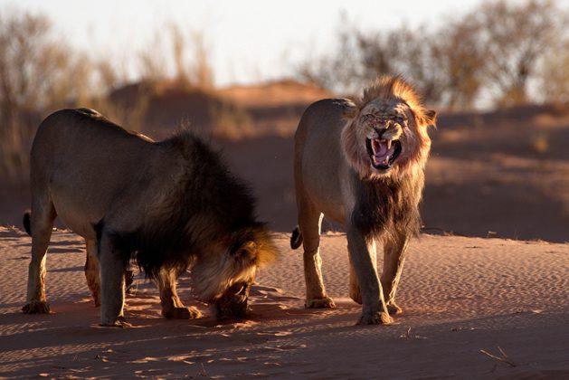 Männchen auf der Düne