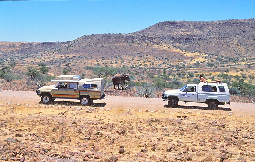 Elefant im Damaraland