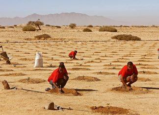 Jojoba-Plantage Subsistenzfarm Namibia