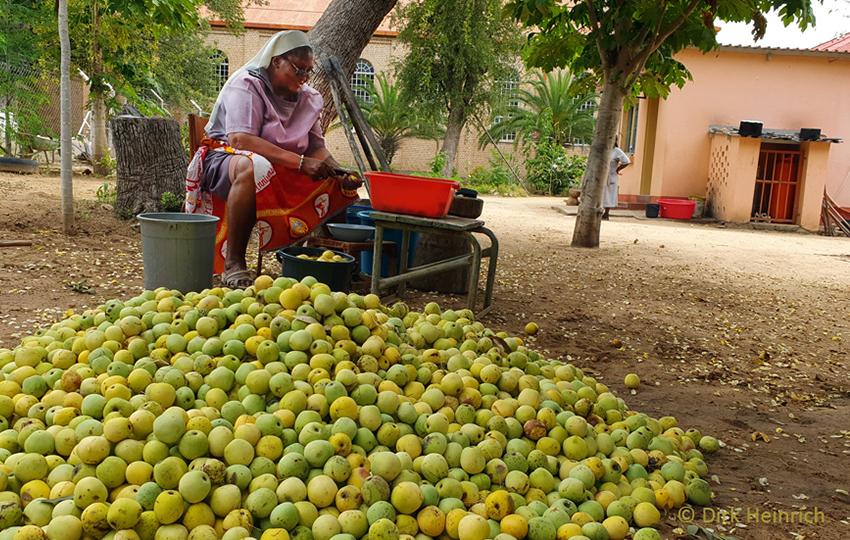 Kavango Marulafrüchte