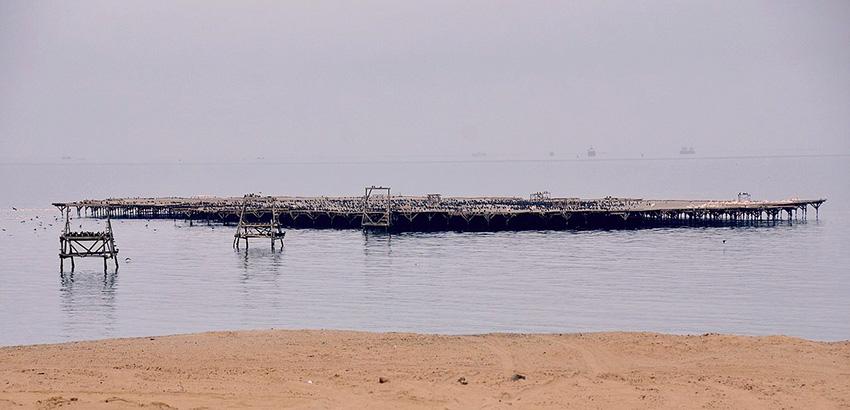 Guano-Insel Walvis_Bay