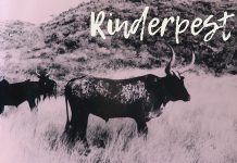 Rinderpest, Namibia