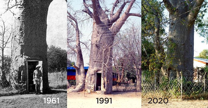 Katima Mulilo, Baobab, Namibia