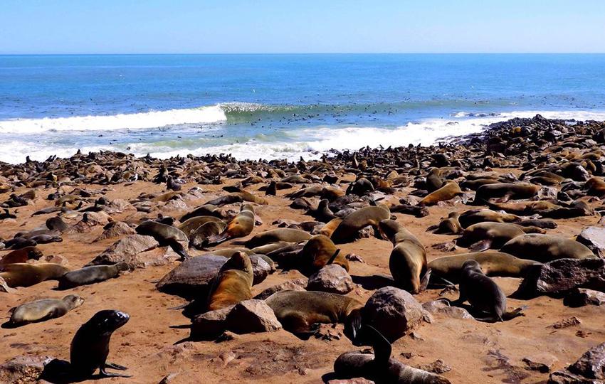 Robbenkolonie, Kreuzkap, Namibia