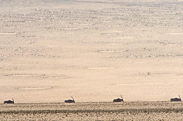 Feenkreise, Hartmannstal, Namibia