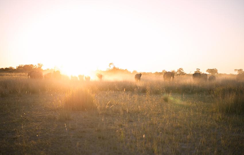 Elefanten, Etosha